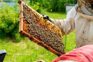 Bee Hive Kits For Beginners