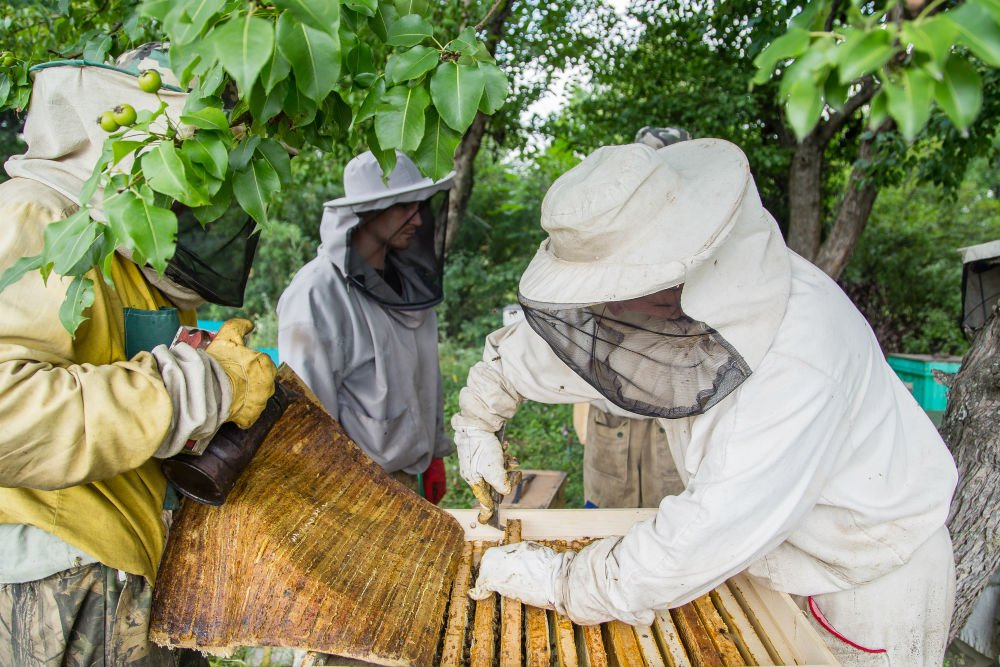 Joining a Beekeeping Association