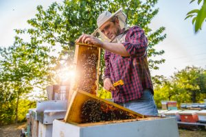 Best Beekeeping Veils To Protect Against Stings