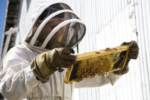 7 Best Bee Suits For Beekeepers